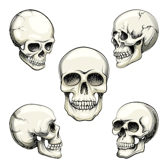Set of five different greyscale views of a naturalistic human skull with teeth  vector illustration isolated on white
