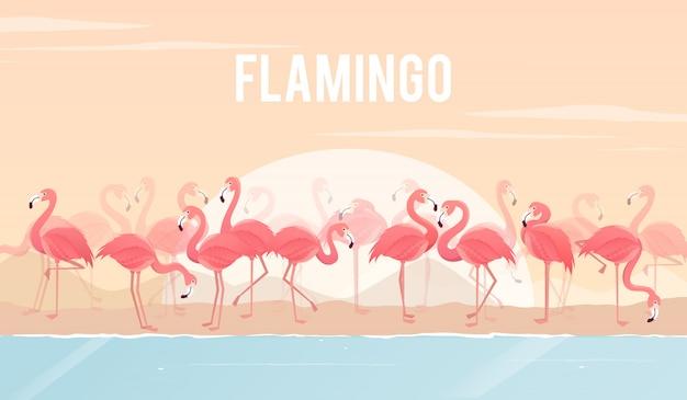 Set of flamingos on background