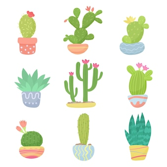 Set of flat cartoon cute desert or home pot cactus