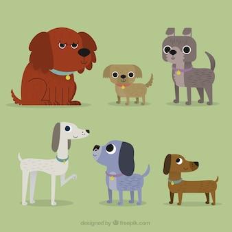 Set di cani piatte