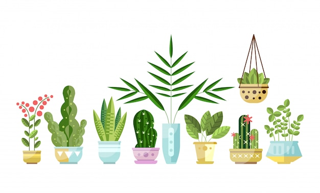 Set of flat style colorful houseplants in pots standing in line. home decorative plants.