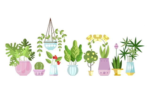 Set of flat style colorful houseplants in pots standing in line.
