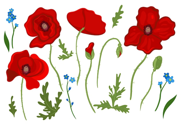 Set of floral elements poppies and forget-me-nots isolated