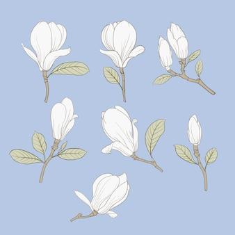Set of floral elements.