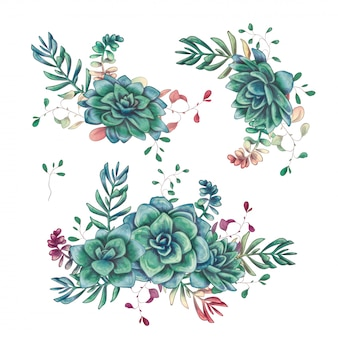 Set of floral succulents compositions in hand draw style.