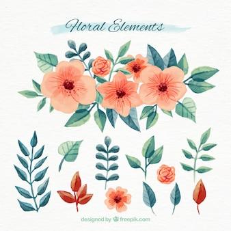 Set di elementi floreali acquerello