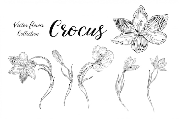 Set of flower arrangements with crocus flowers