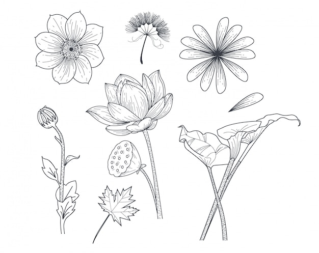 Set flower in drawing style