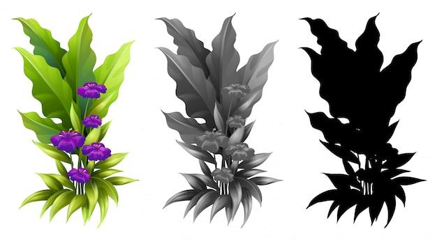 Set of flower plant
