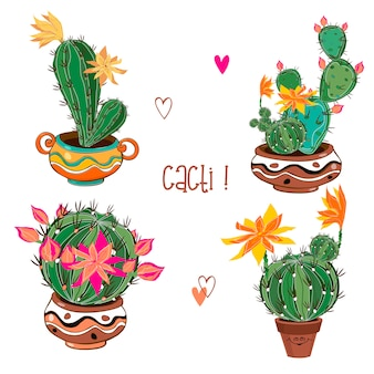 Set of flowering cacti in clay pots.