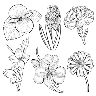 Set of flowers alstroemeria, begonia, carnation, gerbera and gladiolus, hyacinth in hand drawn style isolated