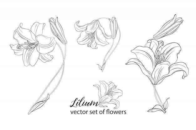 Set of flowers and lily buds.
