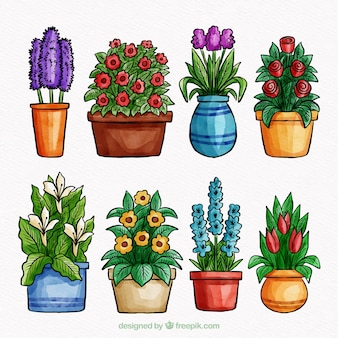 Set of flowers in pot