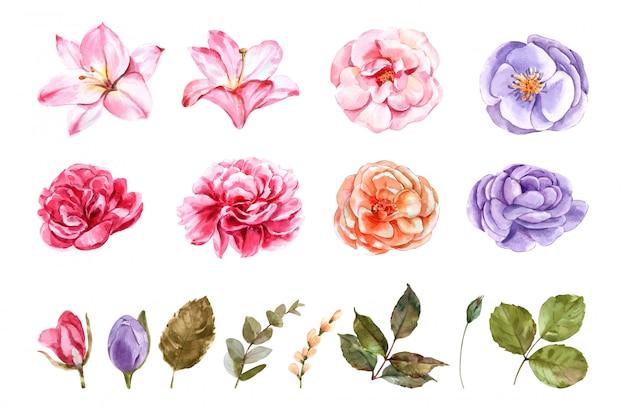 꽃 장미 설정