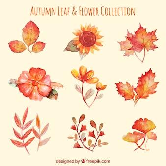 Set di fiori e foglie di acquerello