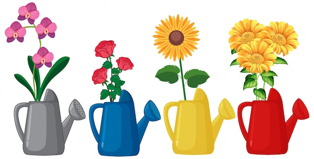 Set of flowers in watering can on white background