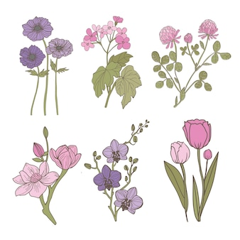 Set of flowers on a white background anemone magnolia begonia tulip orchid clover