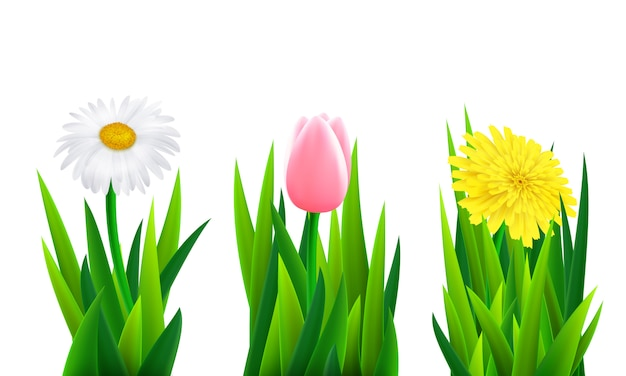 Set of flowers with grass