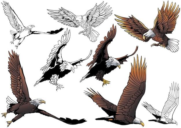 Set of flying bald eagle isolated on white background