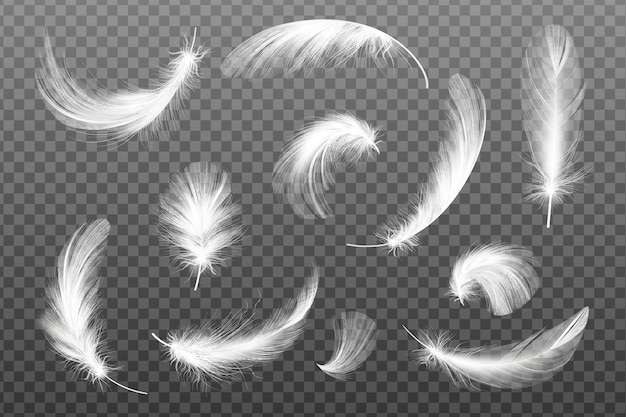 Set of flying realistic     white feathers of various shapes.