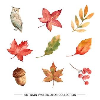 Maple Leaf Vectors, Photos and PSD files | Free Download
