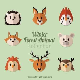 Set di bella foresta degli animali in design piatto