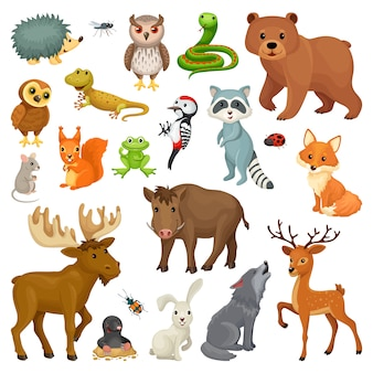 Set of forest animals and birds.
