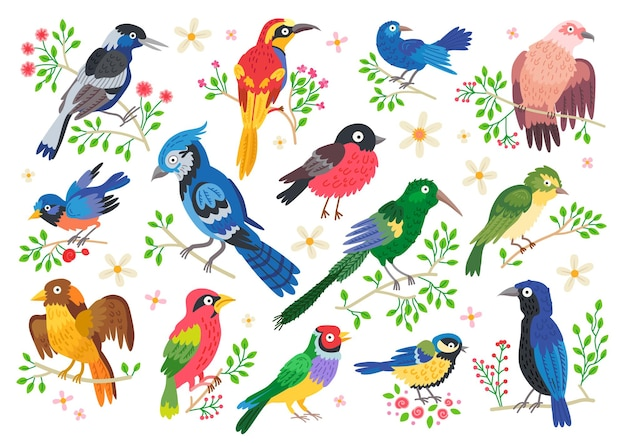 Set of forest birds