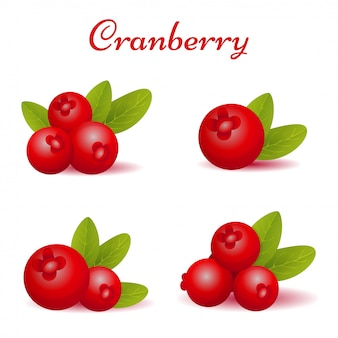 Set of forest cranberry with leaves illustration