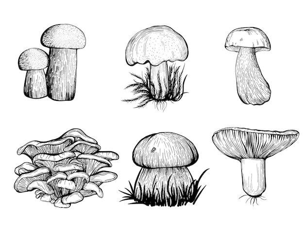 Set of forest mushrooms