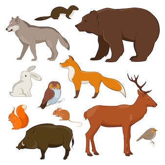 Set of forest wild animals and birds.  illustration