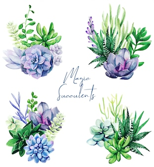 Set of four bright watercolor succulent plants bouquet
