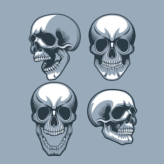 A set of four skulls looking in different directions.