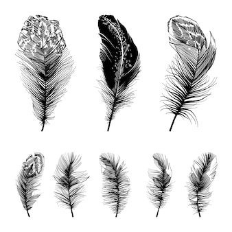 Set of four straight feathers.