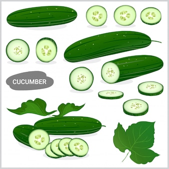 Set of fresh cucumber illustration