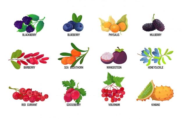 白い背景の健康食品のコンセプトの水平方向に分離された名前のおいしい完熟フルーツアイコンコレクションと新鮮なジューシーなベリーを設定します。