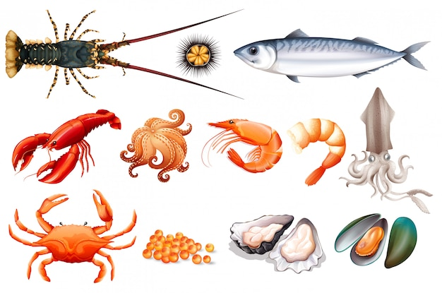 Set of fresh seafood