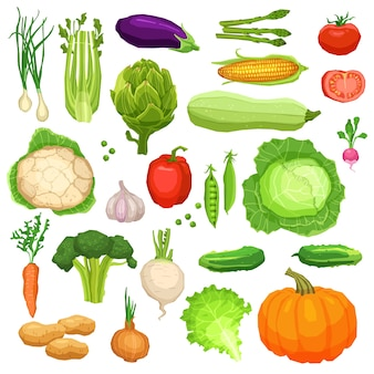 Set of fresh vegetables, healthy and vegetarian food collection
