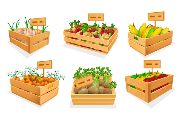 Set of fresh vegetables at market place or store