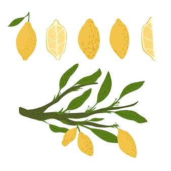 Набор из лимона, веточек с листвой на белом фоне. абстрактный ботанический эскиз рисованной в стиле каракули.