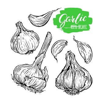 Set of garlic on a white background. hand-drawn illustration