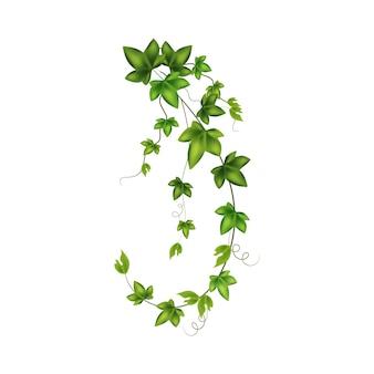 Set of geen vine liana or ivy