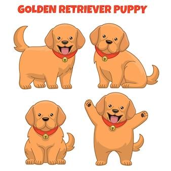 Set of golden retriever puppy dog