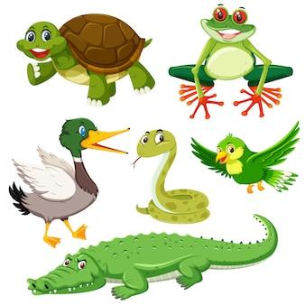 Set of green animal