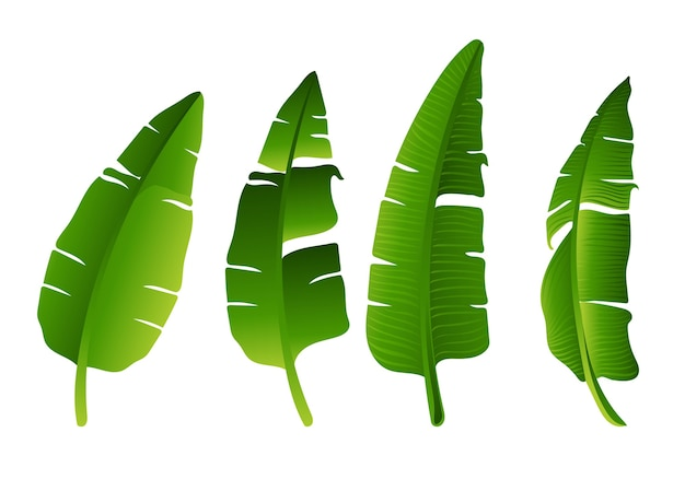 Set of green banana tree leaf design