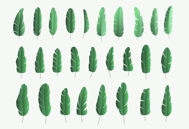Set of green banana tree leaves