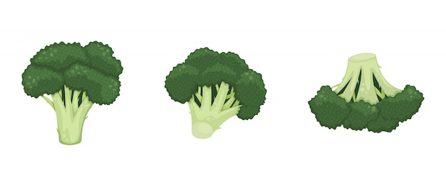 Set of green broccoli inflorescence. healthy food, vegetarianism. isolated flat illustration.