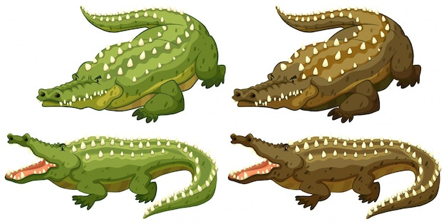 Set of green and brown crocodiles