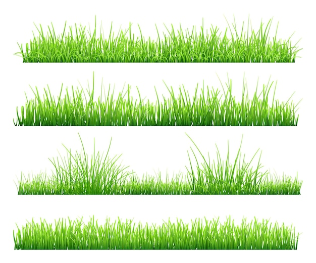 Set of green grass, isolated on white background. illustration