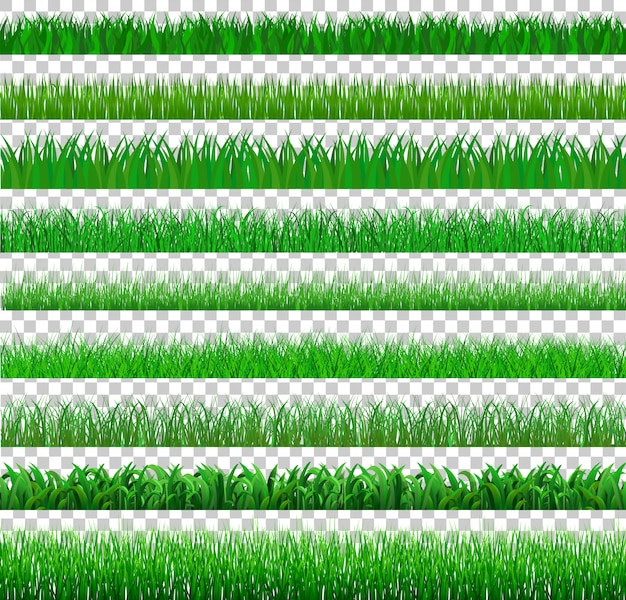 Set green grass there are many form isolated on transparent, vector illustration